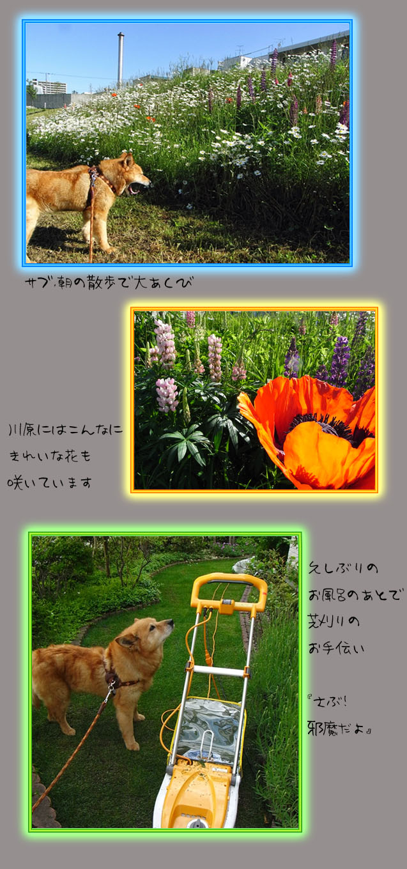 b0019313_19132969.jpg