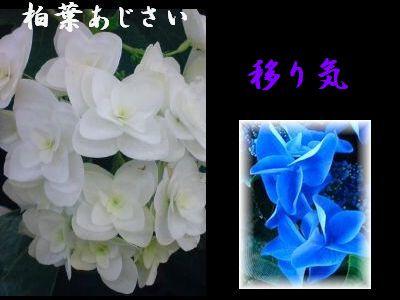 b0085815_2322363.jpg