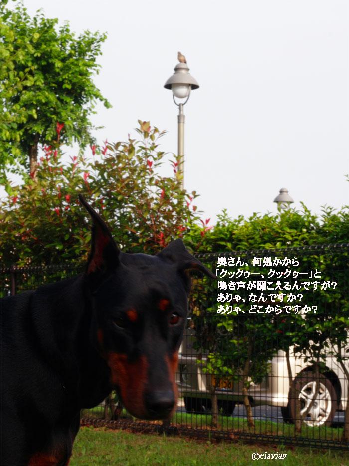 b0079523_1892482.jpg