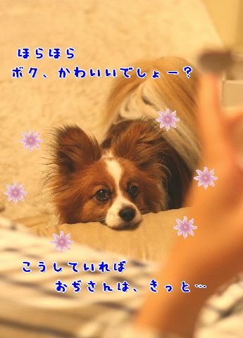 d0013149_10332727.jpg