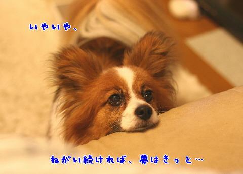 d0013149_10365372.jpg