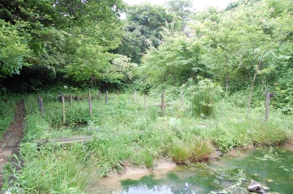 ササユリ観賞者案内  in  うみべの森  by  (TATE-misaki)_c0108460_15293030.jpg