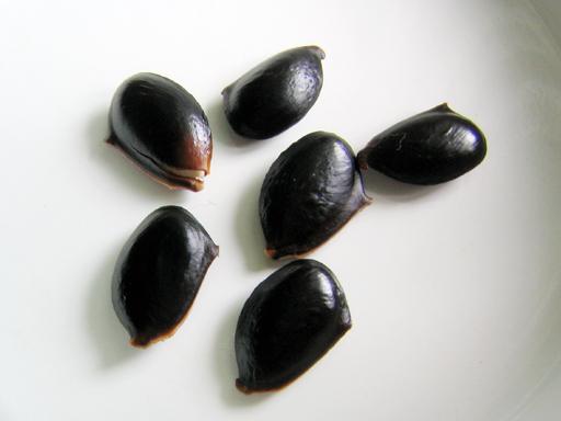 サポジラの種子