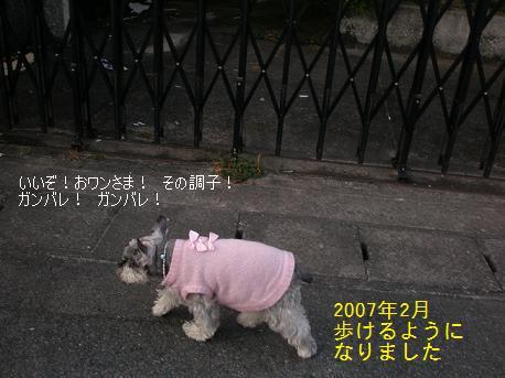 c0098501_15594576.jpg