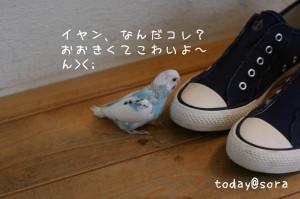 b0143835_14341919.jpg