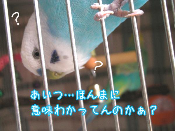f0132055_8581911.jpg