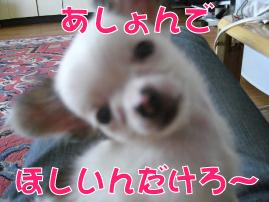 f0170966_11114295.jpg