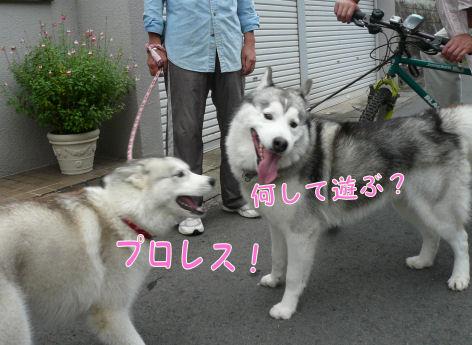 f0112407_16574935.jpg