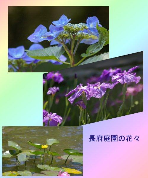b0052108_902954.jpg