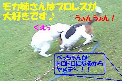 f0121712_11314462.jpg