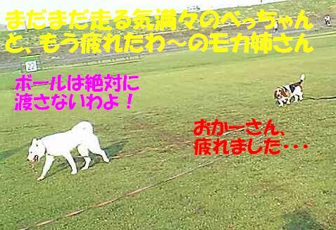f0121712_11315170.jpg
