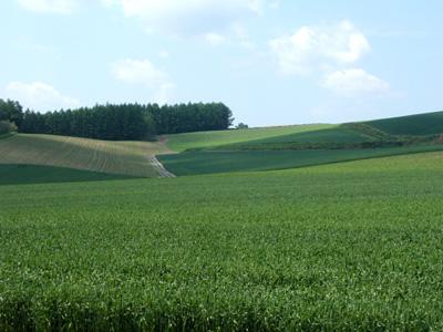 赤麦の丘_f0096216_1231466.jpg