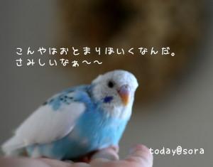 b0143835_23293295.jpg