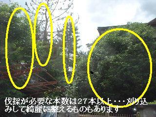 f0031037_1811832.jpg