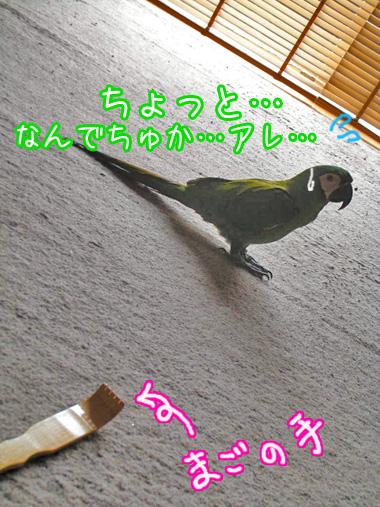 f0132055_22563013.jpg