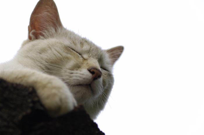公園の枯れ木の上で猫ちゃんがお昼寝しておりました。顔のアップですが、全景もいれたお昼寝猫ちゃんを次回載せますね。