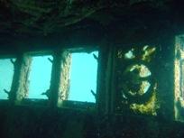 [ダイビング]ウミウシと沈船と_a0043520_23291155.jpg