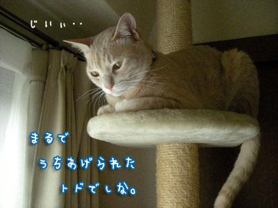 c0096342_15453046.jpg