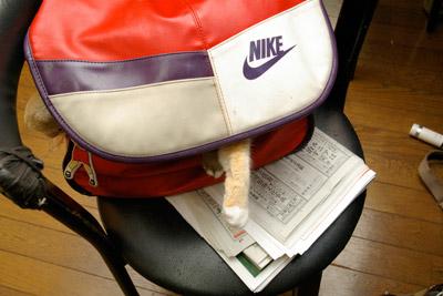 バッグ猫_a0028451_23394774.jpg