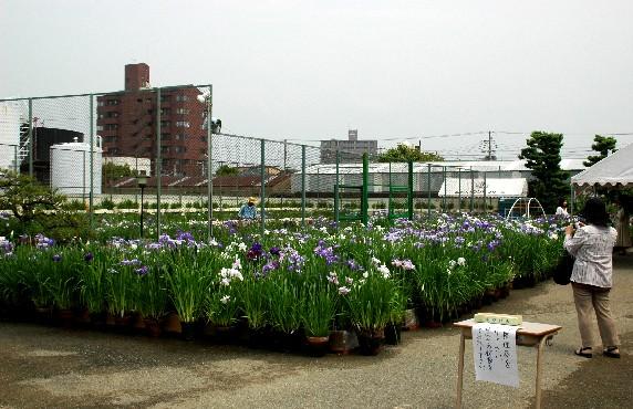 花のある風景_b0093754_0441352.jpg