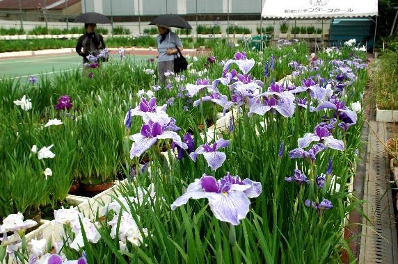 花のある風景_b0093754_0444124.jpg
