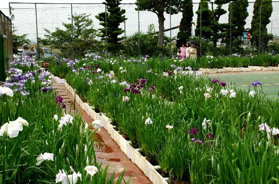花のある風景_b0093754_0444918.jpg