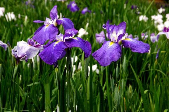 花のある風景_b0093754_23585391.jpg