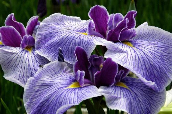 花のある風景_b0093754_23592164.jpg