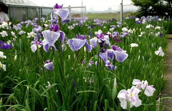 花のある風景_b0093754_23592934.jpg