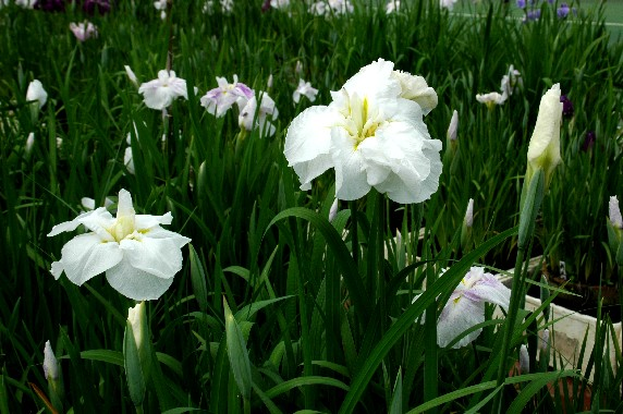 花のある風景_b0093754_2359567.jpg