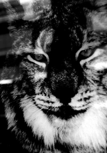 猫ちゃん。_b0133890_1533477.jpg