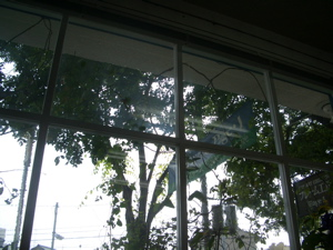 木漏れ日の額装_a0077203_17521275.jpg