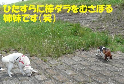 f0121712_15355727.jpg