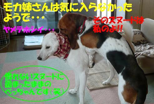 f0121712_16354481.jpg