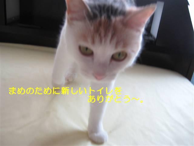 d0046821_1334040.jpg