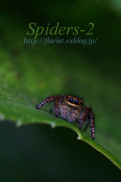 「Spiders-2」  蜘蛛の写真展_b0023523_11421998.jpg