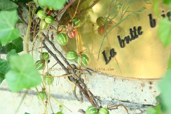 6月の花嫁  ラビュットボワゼ様の装花_a0042928_062368.jpg
