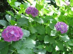 最近の庭は・・・_c0038347_20293182.jpg