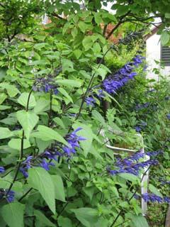 最近の庭は・・・_c0038347_20302776.jpg