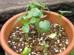 最近の庭は・・・_c0038347_20315689.jpg
