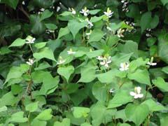 最近の庭は・・・_c0038347_20404422.jpg
