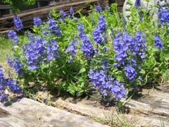最近の庭は・・・_c0038347_2063767.jpg