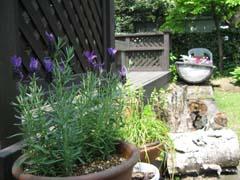 最近の庭は・・・_c0038347_2071930.jpg