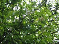 最近の庭は・・・_c0038347_2081336.jpg