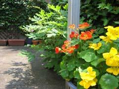 最近の庭は・・・_c0038347_2092131.jpg