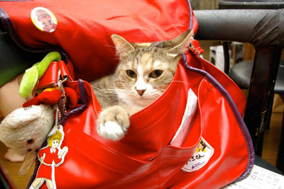 バッグ猫_a0028451_0381381.jpg