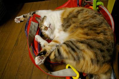 バッグ猫2_a0028451_1294291.jpg