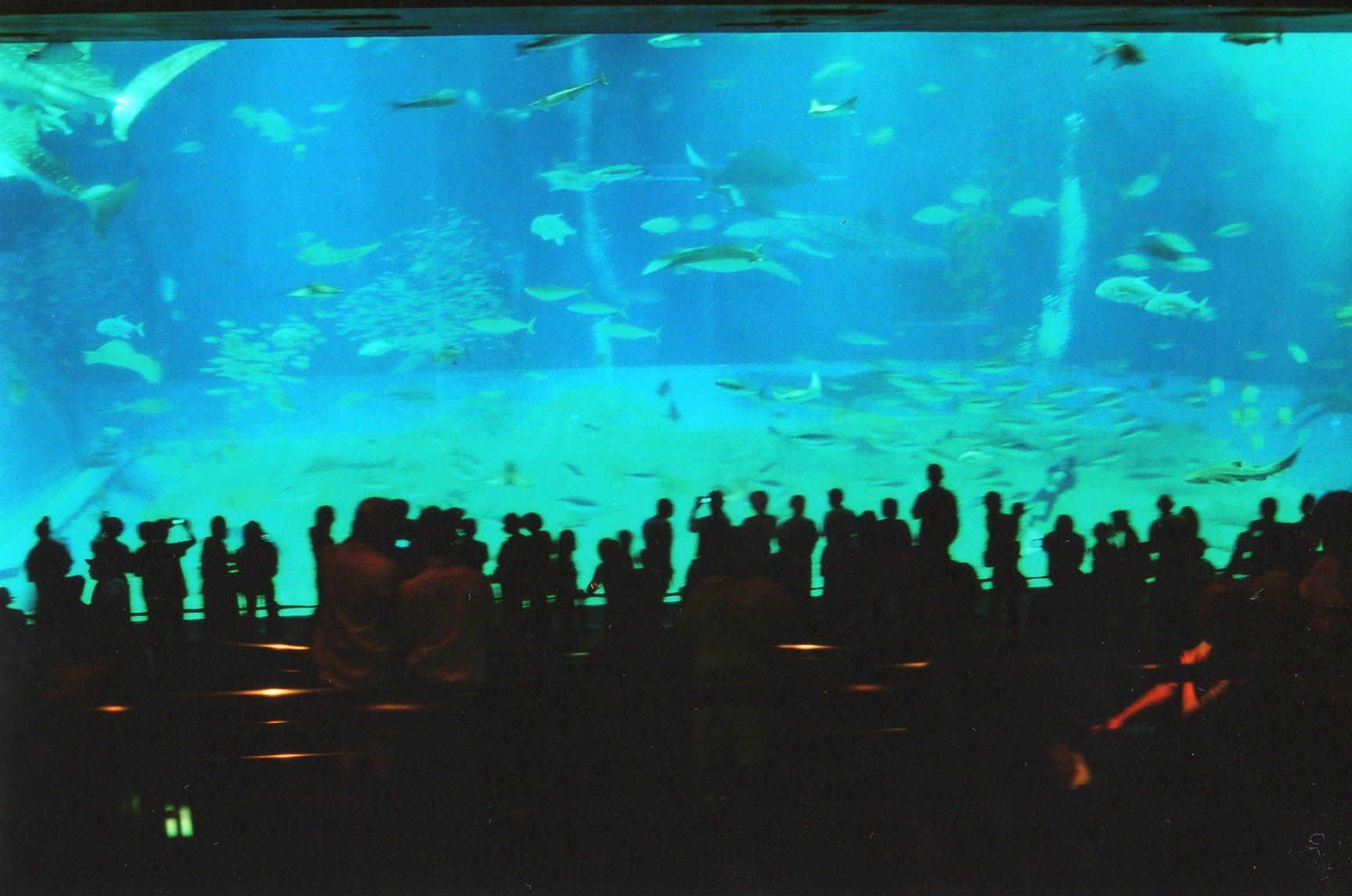 沖縄_b0071355_2005332.jpg