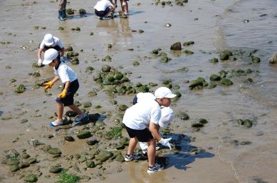 箱作小学校2年学習サポート…箱作自然海岸(西浜)_c0108460_16585553.jpg