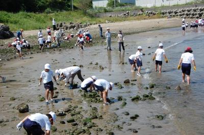 箱作小学校2年学習サポート…箱作自然海岸(西浜)_c0108460_1659207.jpg
